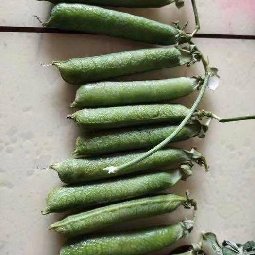 寶豐縣 豌豆莢,鮮貨!籽粒飽滿,色澤鮮艷!莢長6到8厘米