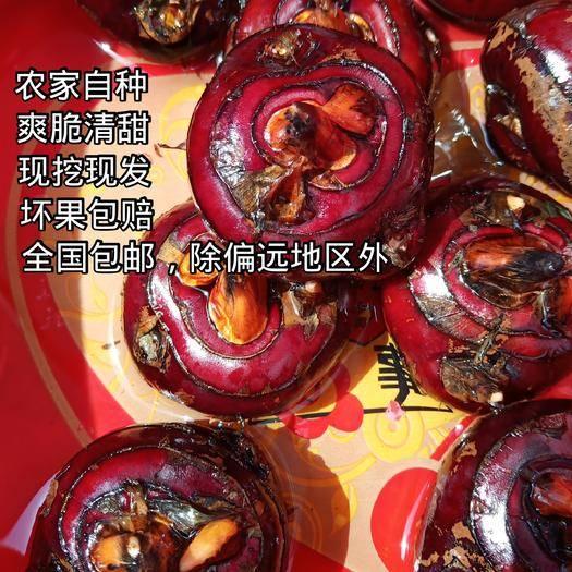 庐江县 安徽庐江特产大红果马蹄荸荠  产地直销 仅支持批发