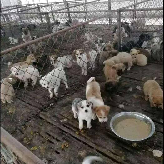徐州新沂市土狗 供苗