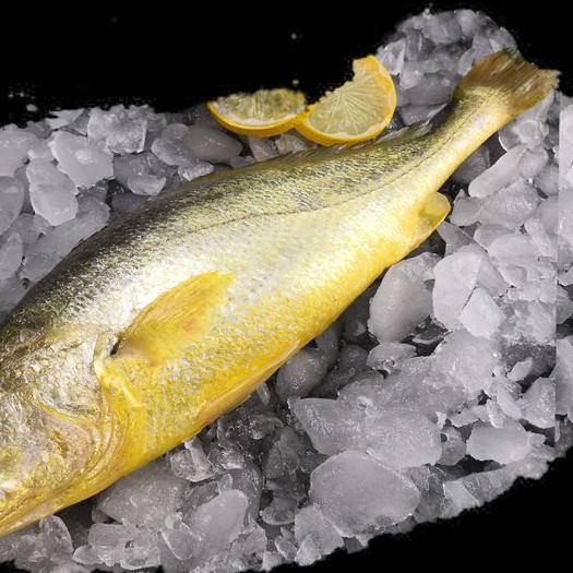寧德蕉城區 3斤3條裝【包郵】寧德海捕大黃魚  一件代發 批發