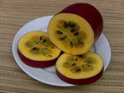 桂林象山区香如蜜种子 丶红香蜜是一种从南美引进的新型水果。美味多汁,香甜可口
