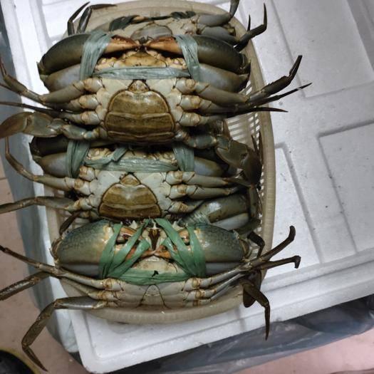 广州荔湾区 青蟹,新鲜的青蟹,各种规格都有,