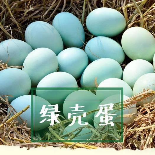 長沙雨花區烏雞蛋 烏雞綠殼蛋,一手貨源尋找長期合作客戶