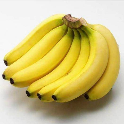 信阳潢川县 广东香蕉