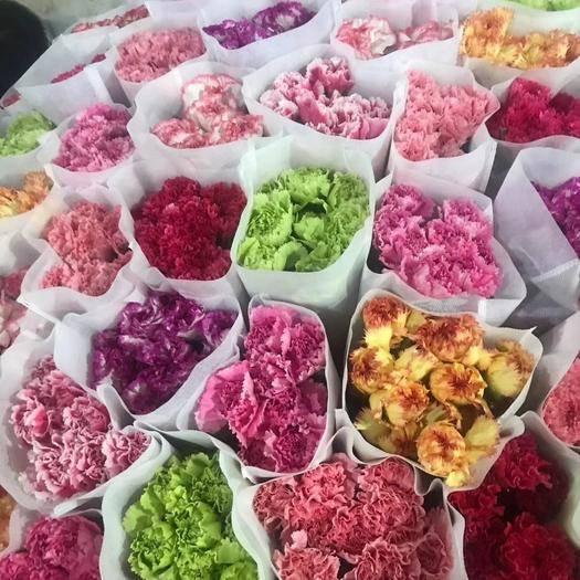 昆明 康乃馨地摊展会热卖好产品扎把模式颜色齐全