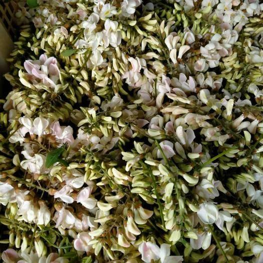 紅河彌勒市 槐花