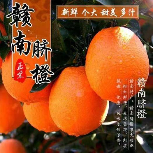 安阳安阳县 【多仓发货】正宗江西赣南脐橙新鲜水果孕妇橙子手剥橙应季甜脐