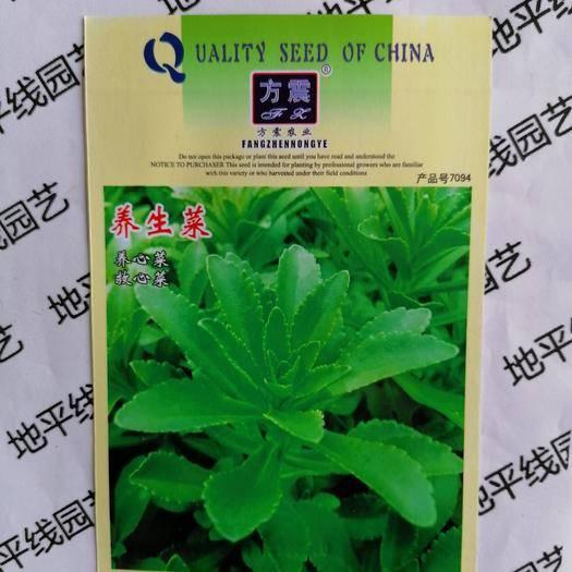 南充嘉陵区 高钙菜种子救心菜  费菜 种子新种子包邮