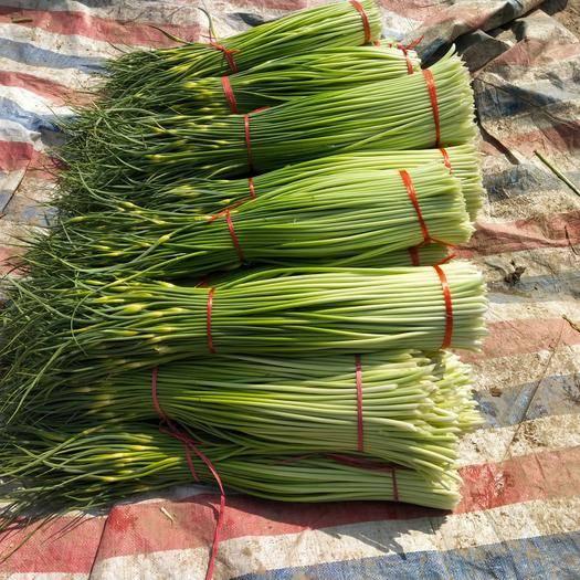 徐州豐縣 新鮮上市白帽水蒜苔,代發,代購