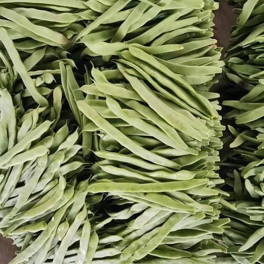 莘县绿扁豆 大量供应大扁一级,二级