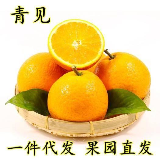 成都蒲江縣青見柑桔 新鮮現摘四川青見柑橘5-9斤當季時令柑橘子多汁產地直銷青見