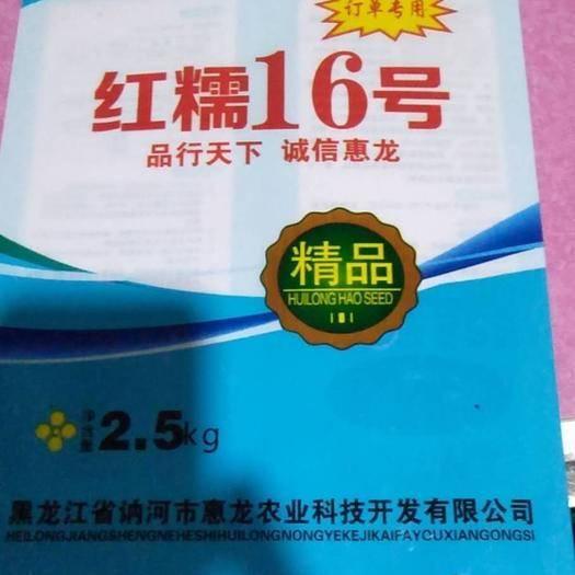 滄州黃驊市高粱種子 高粱種