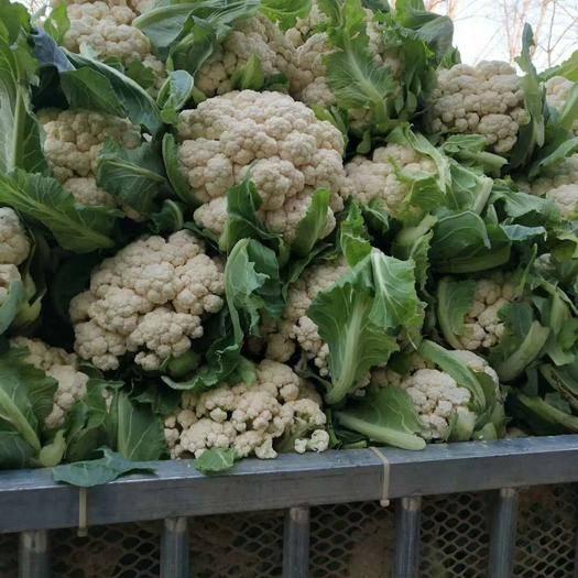 新野县有机花菜 适中 2~3斤