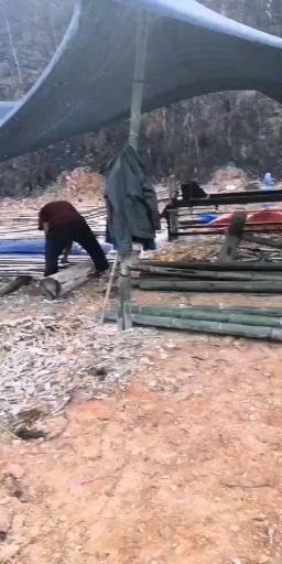 柳州融安縣 本人從事竹子行業十多年,貨源充足,望各地老板來電