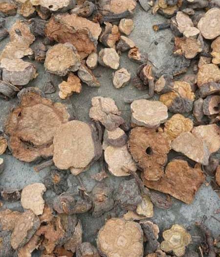 恩施土巴东县 自家挖的首乌,干货,只有300斤左右。