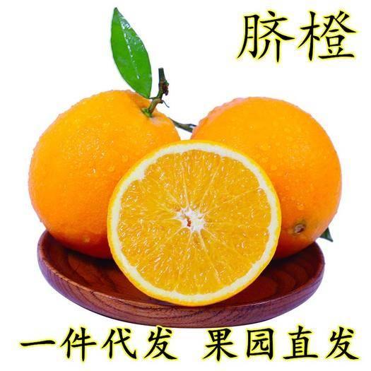 成都蒲江县 四川金堂脐橙子3-10斤新鲜现摘一件代发非赣南脐橙当季水果