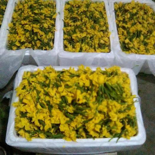 潍坊寿光市黄瓜花