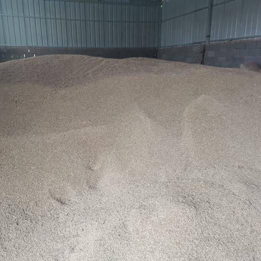 張掖民樂縣 優質大麥低價出售
