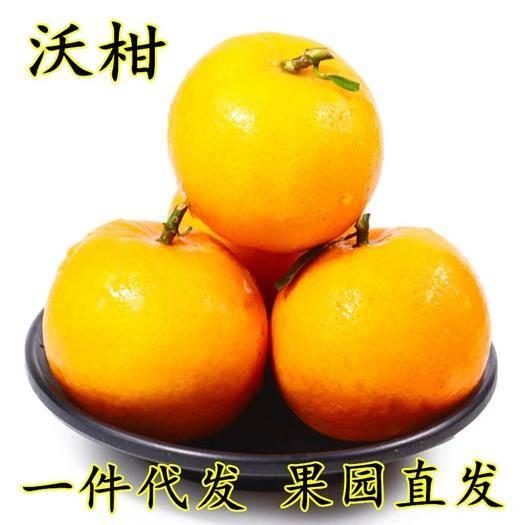 成都蒲江縣 現貨現摘直發沃柑當季時令新鮮柑橘水果5斤包郵皮薄甘甜多汁肉