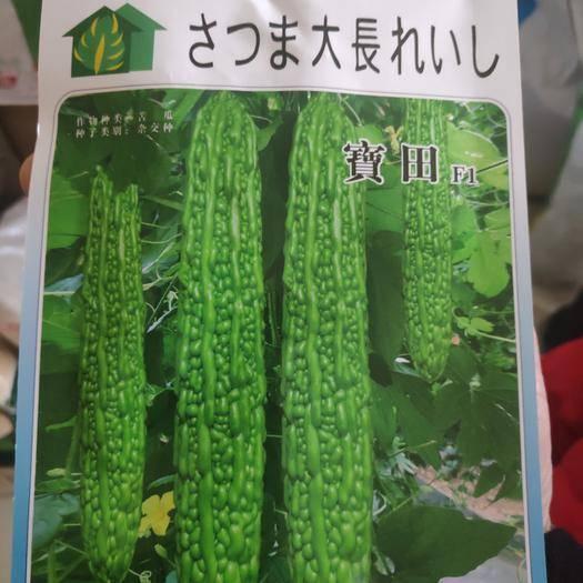 沭陽縣寶田苦瓜種子 早熟耐寒耐熱性好瘤條豐滿亮綠瓜型順直美觀高抗病霉病產量高