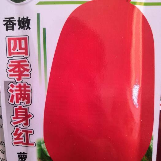 黔西兴义市红皮萝卜种子 四季满身红萝卜