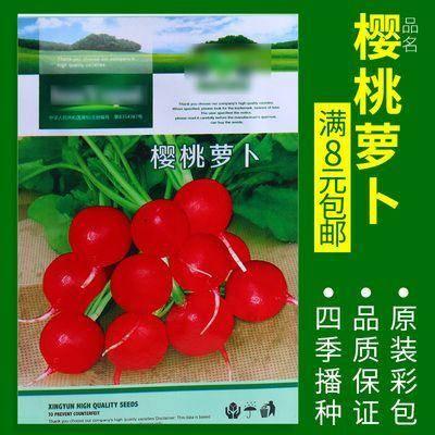 徐州新沂市 樱桃萝卜种子