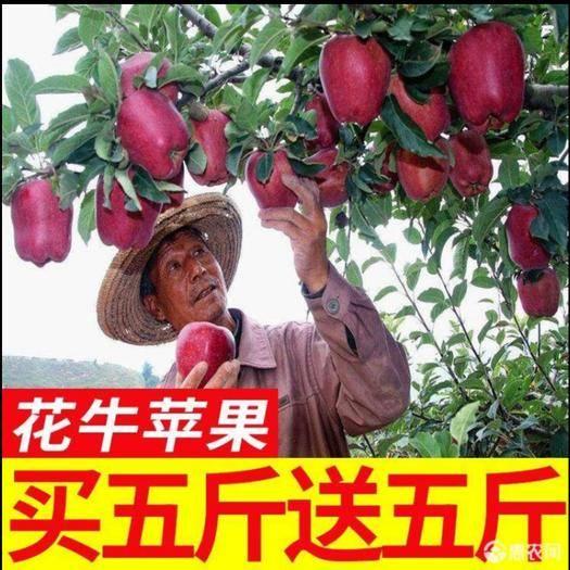 天水 【48小时之内发货】甘肃新鲜花牛苹果应季水果10斤一件代发