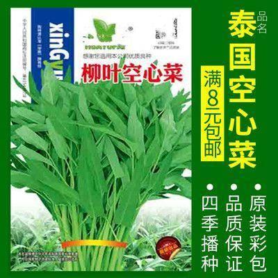 徐州新沂市 空心菜种子