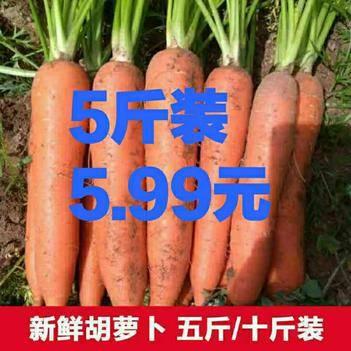 【现挖鲜发】沙地胡萝卜新鲜红萝卜5斤农家自种蔬菜类水果萝卜