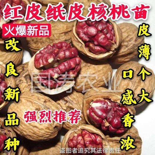 平邑县 红皮核桃苗 改良品种 皮薄个大 脱毒育苗 卖疯了 包邮