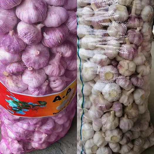 金鄉縣 常年供應金鄉紫皮大蒜,質優價廉,產地批發