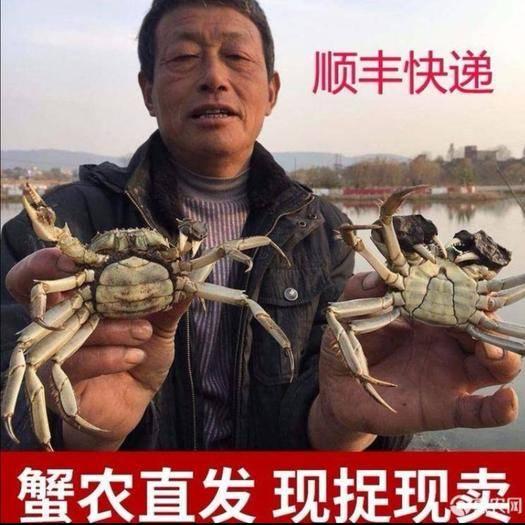 芜湖县 【顺丰包邮,死蟹包赔】热销鲜活大闸蟹2.0-1.8两16只