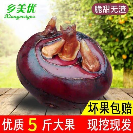无为县 【现挖现发 】马蹄农家特产新鲜水果地栗蔬菜带泥荸荠1