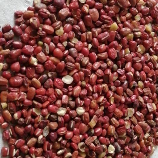 丹東東港市大紅豆