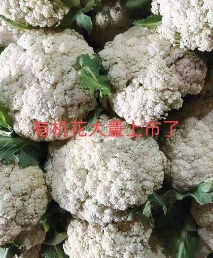 沂水县有机花菜 白面青梗有机花大量上市