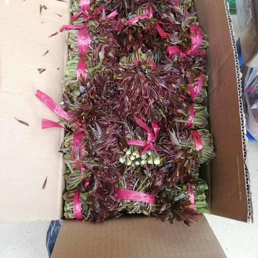 渭南华州区红香椿芽 红油香椿