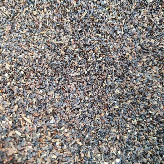 亳州谯城区 桔梗籽 桔梗种子 纯新二年生桔梗籽 出芽率高免费技术指导