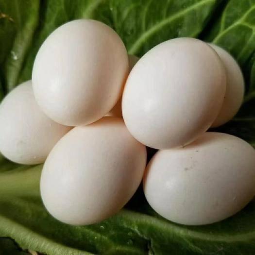 安陽內黃縣白鴿蛋 鴿蛋 鮮鴿蛋 種蛋 雜糧喂養 孕婦寶寶營養早餐,滋陰美容養顏