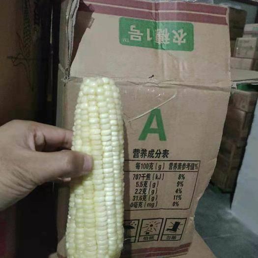 昆山市速冻糯玉米 糯玉米特级和一级特价处理一口价