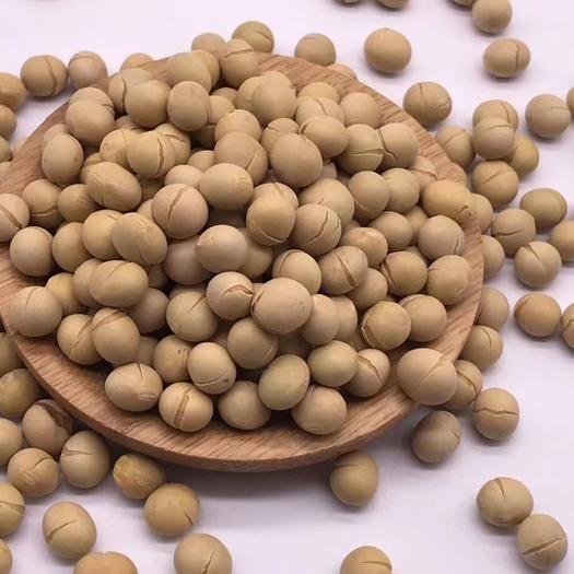 保定安国市黑龙江大豆 批发低温烘焙黄豆,低温烘焙熟养生食材批发,可磨粉喔!