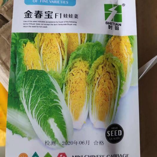 苏州姑苏区 金春宝娃娃菜种子早熟黄心耐抽苔叶球合抱内叶金黄帮薄甜嫩味道鲜