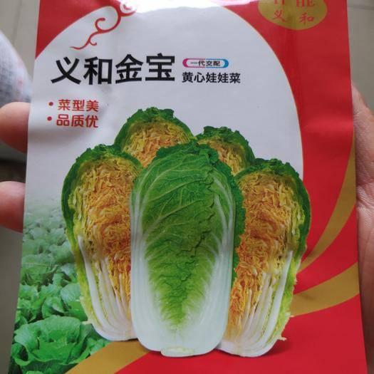 苏州姑苏区 义和宝宝娃娃菜种子小型白菜净菜率高包球速度快,味道鲜美品质佳