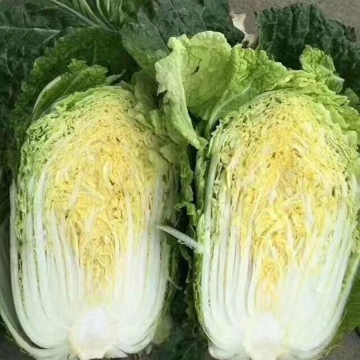 兰陵县 兰陵县万亩优质黄心白菜大量上市