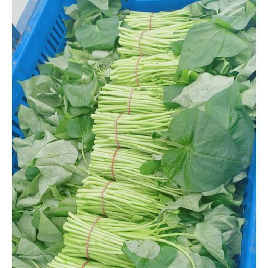 上海紅薯葉 上海特產番薯葉,新鮮無公害?,F采現賣量大從優