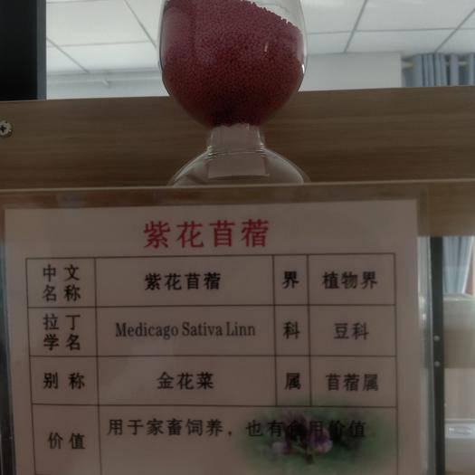 固原隆德县 紫花苜蓿