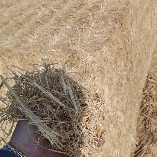 天津宁河 干草,饲料,低价优质
