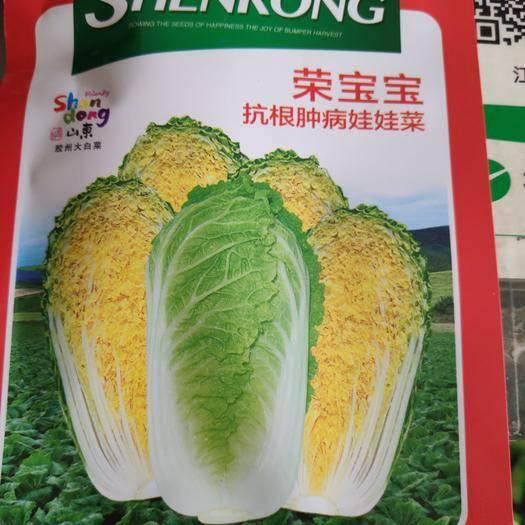 苏州姑苏区 荣宝宝娃娃菜种子小型深黄心春秋兼用型娃娃菜风味品质好纤维少