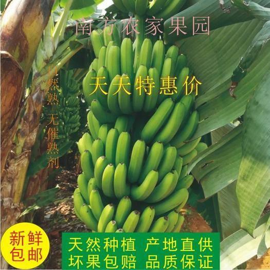 南寧賓陽縣 廣西新鮮農家香蕉 新鮮水果 現采鮮蕉 新鮮包郵