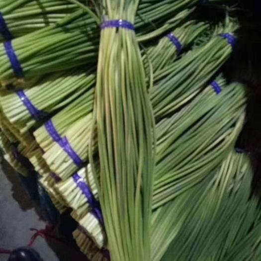 濟寧金鄉縣紅帽蒜苔 代發全國各地市場  長年精加工蒜薹 專業儲存蒜薹
