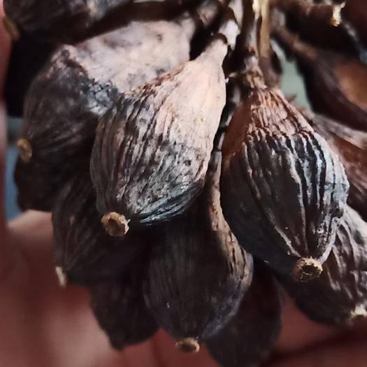 紅河金平苗族瑤族傣族自治縣 現一噸左右的草果有想法趕緊來秒